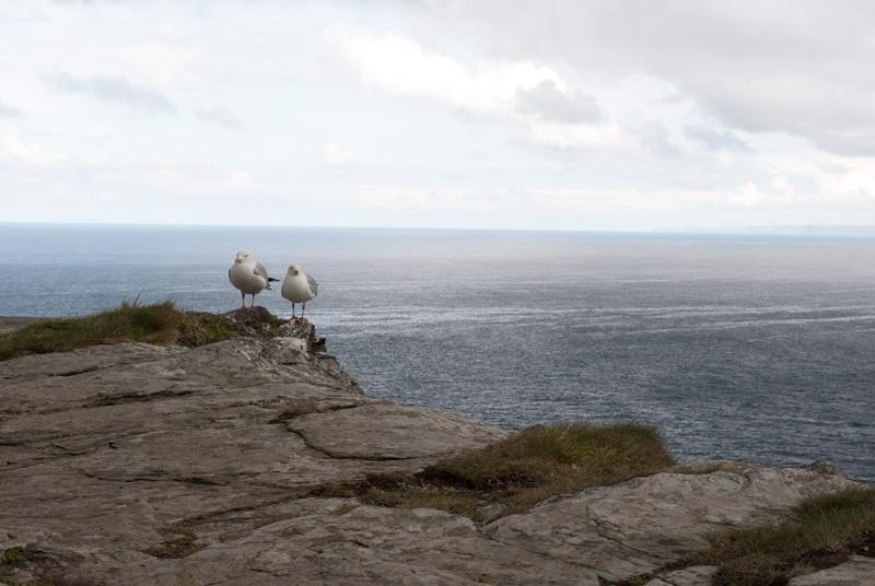 Un par de gaviotas nos observaba mientras recorríamos las ruinas