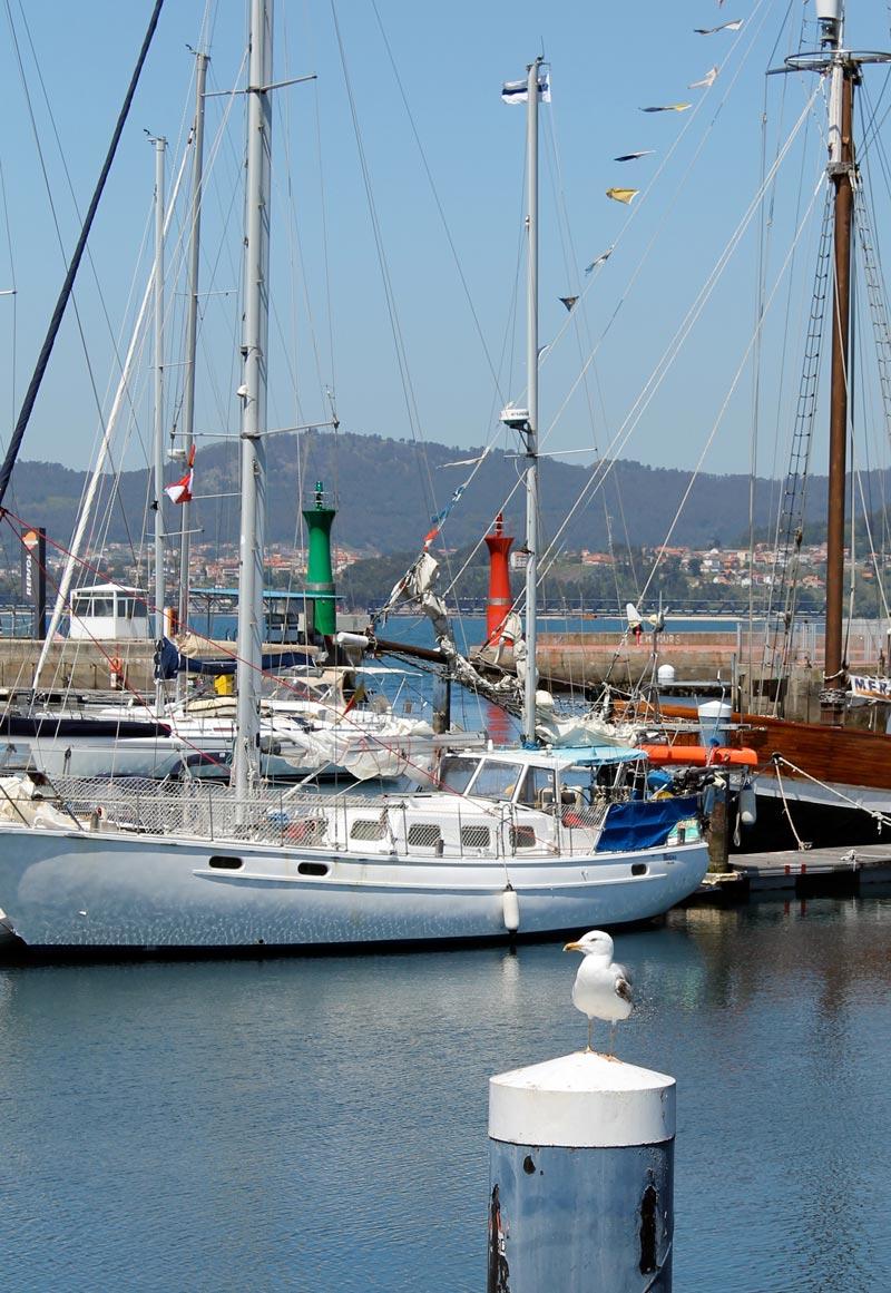 Gaviotas posando en el Puerto